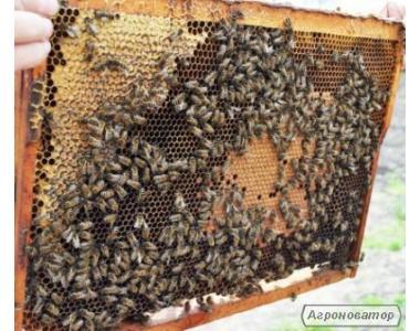 Продам бджіл Маріуполь 50грн за рамку