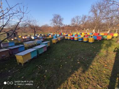 Пчелопакеты 2020