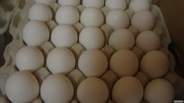 Продам племенные инкубационные яйца породы Ломан Вайт