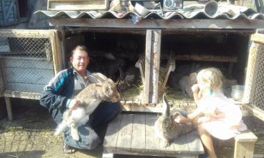 Продам кролів породи бельгійський обр(фландр)