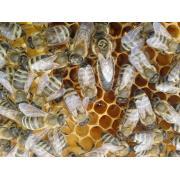 Пчелопакеты тип Вучковский