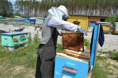 Продаю бджоли