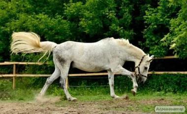 Продам коня.