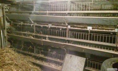 Клітки для курчат