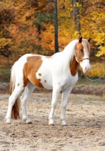 супер пони, Бемби 3 года