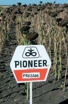 Семена подсолнечника pioneer ПР63А86 / PR63A86 RM 38