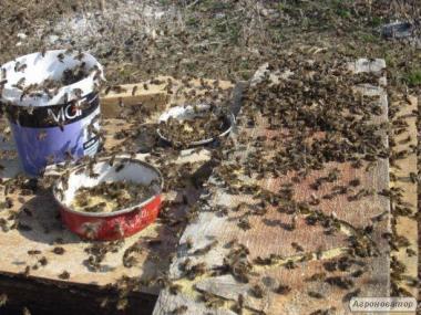 Соевая мука для пчел, белково-витаминная добавка