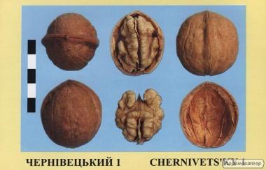 Саджанці горіха волоського сорт Чернівецький 1