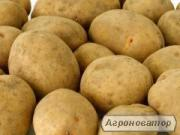 Картофель из Беларуси