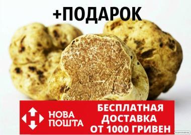 Міцелій білого трюфеля гриб Tuber magnatum насіння