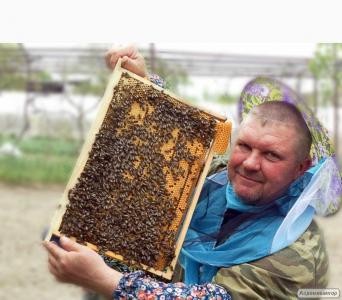 Продам бджолопакети з доставкою