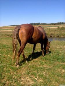 Продам 3 коней ваговози