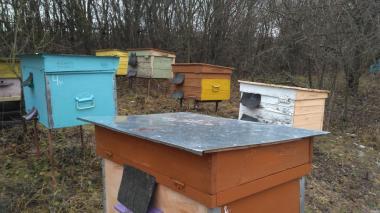 Продам пчелосемьи в Хмельницком