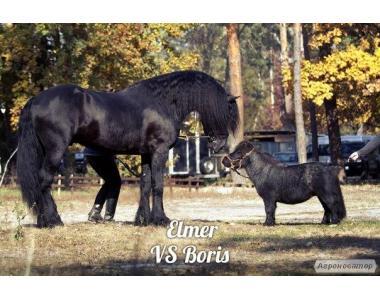 карликовый пони Продам
