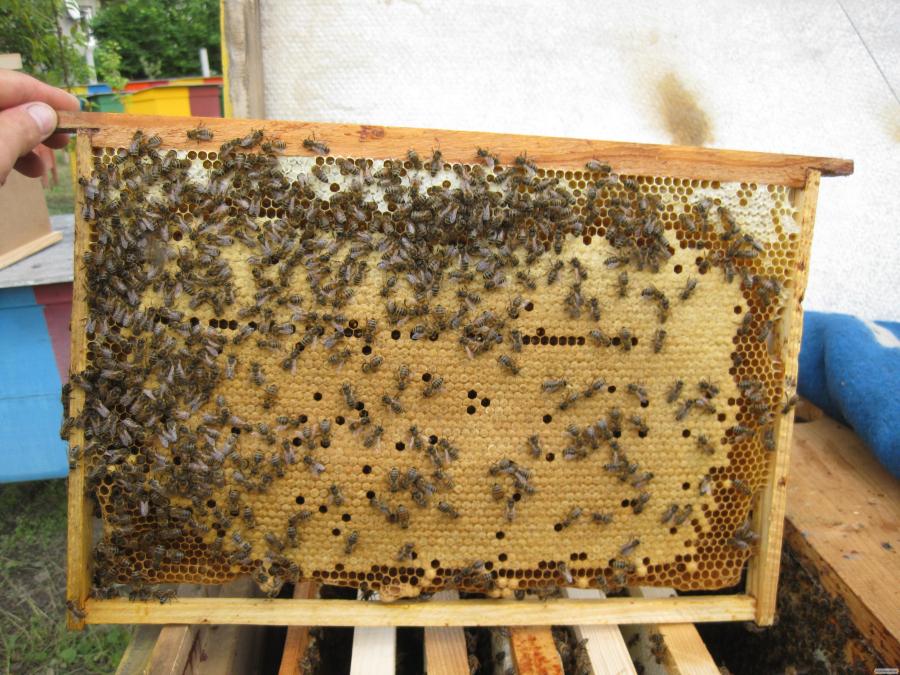 Бджолопакети 2021 Доставка по Україні