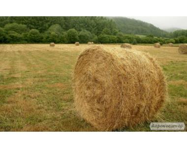 Продается сено луговое в тюках