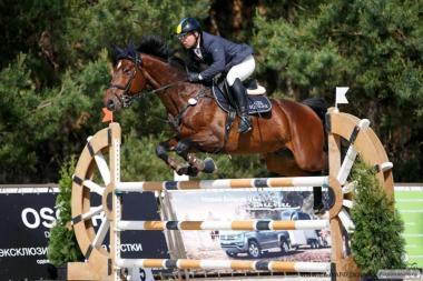 продам спортивного коня
