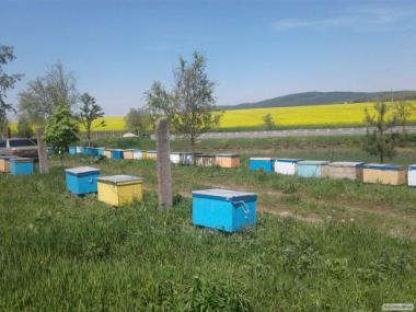 Пчелопакеты, пчелопакеты с достакою по Украине