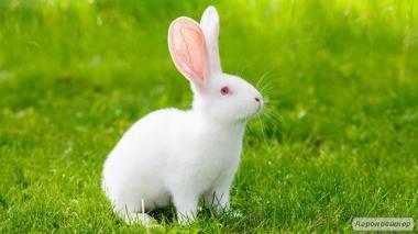 Продам кроликов на развод