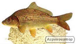 Рибне борошно Україна, рибна мука від виробника Україна
