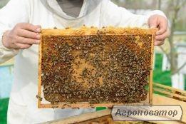 Продам бджоли.14 бджолопакетів . КАРПАТКА номер телефону