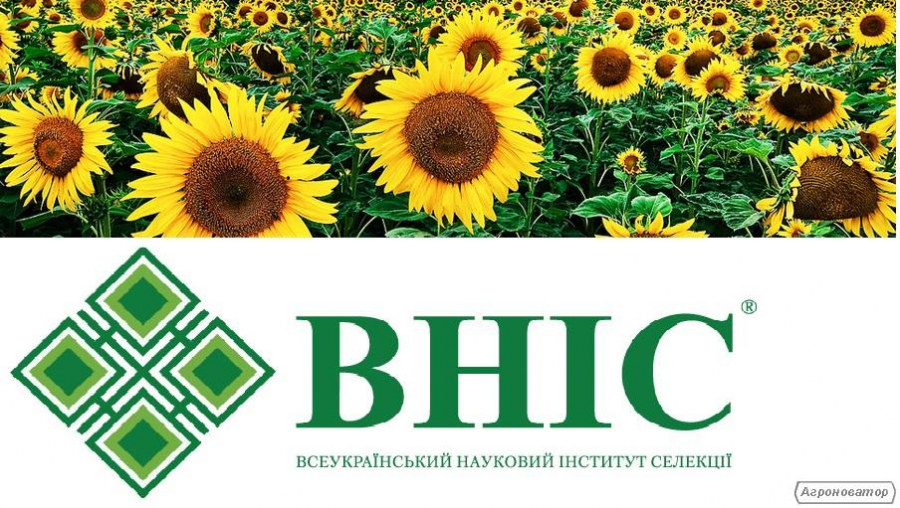 Насіння соняшнику Український F1(стандарт) врожаю 2016 року, ВНІС
