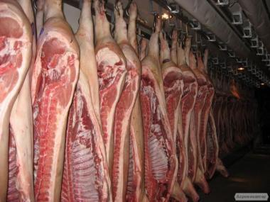 М'ясо свинини в напівтушах, 1 сорт, бекон, охолоджена
