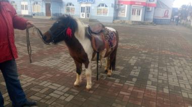 Продам молодого поні.
