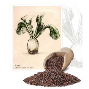 Семена репы