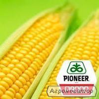Насіння кукурудзи Pioneer P9000 (Піонер П9000) (ФАО 310)