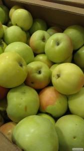 Яблука оптом