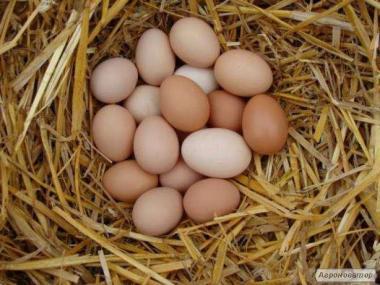 Продам курячі яйця Домашнє