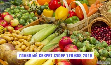 Лучшее удобрение для земли почти даром. Грибной компост в Одессе.