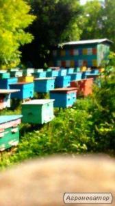 Бджоло пакети
