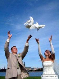 заказ белых почтовых голубей на свадьбу,почтовые голуби