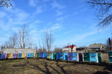 Продам бджолопакети карпатської породи