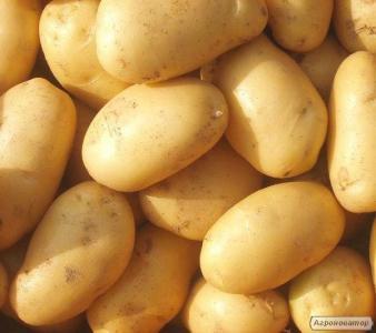 Продам картоплю. Насіннєвий