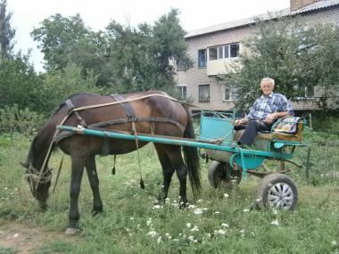 Продам коня робочий чотирирічну.