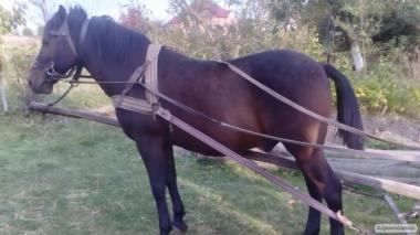 Продаю лошадь недорого + виз.