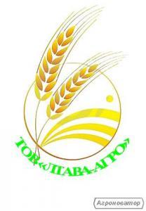 Пшеница озимая Удачная (остистая) Одесский СГИ
