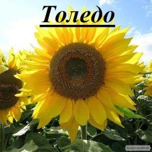 Продамо насіння гібридів соняшнику, стійких до гранстару
