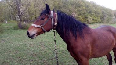 продам коня(кобилу)