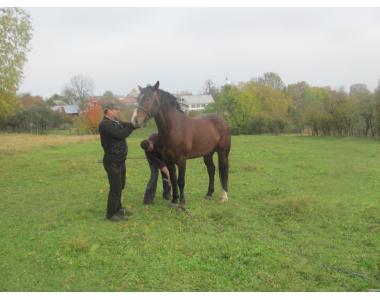 Породам коня