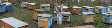 Продам бджолосім'ї