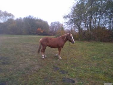 Продам коня