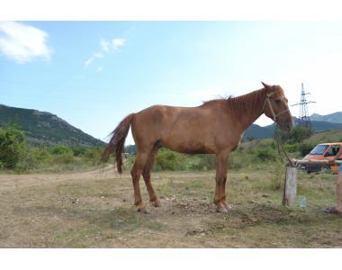 Продам лошадей г.Феодосия,Крым