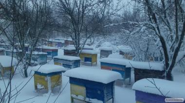 Продам 50 бджолосімей Української степової
