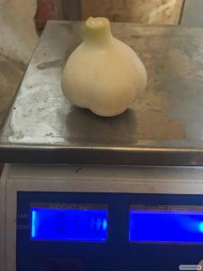 Продам чеснок урожая 2017 года. Сорт Софиевский