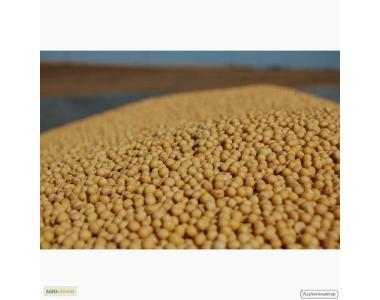 Семена посевной сои сорта Apollo, устойчивого к раундапу