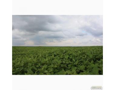 Семена посевной сои сорта Apollo, устойчивого к гербициду